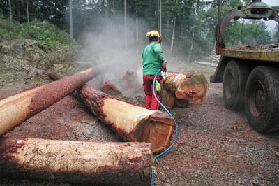 Ecorcer les arbres rapidement et en douceur